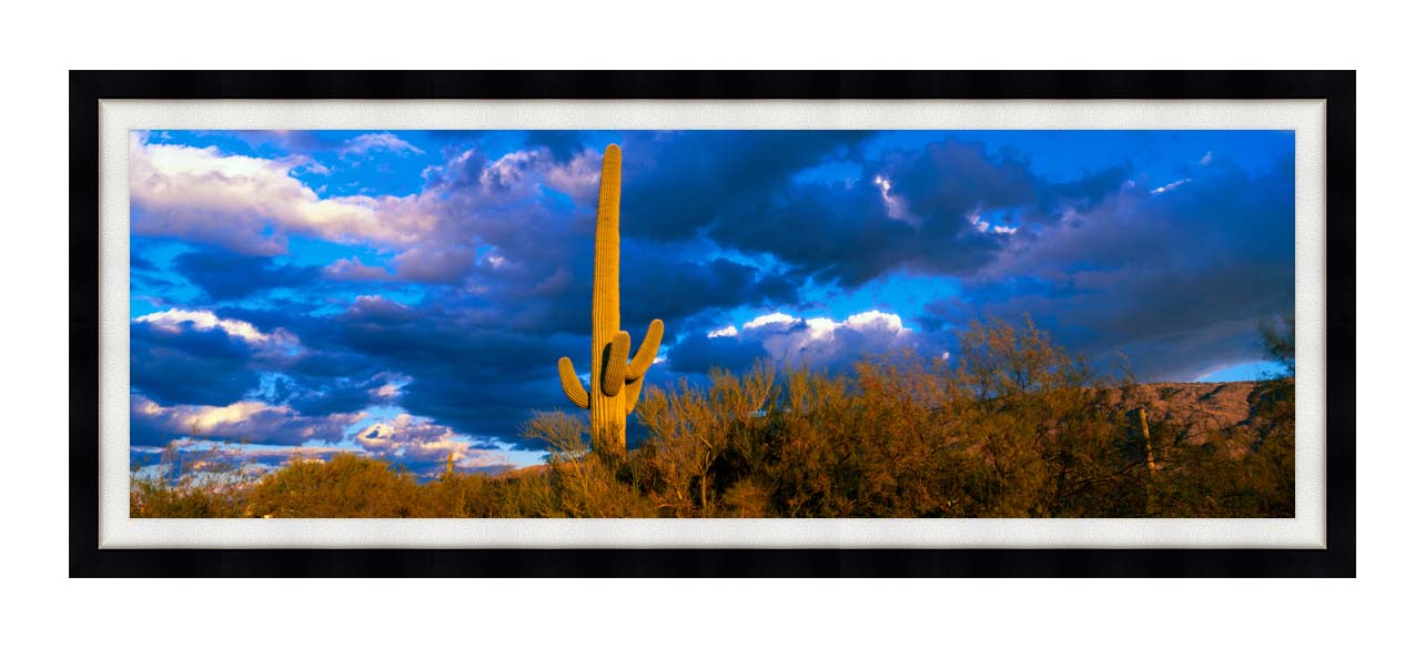 Visions of America Saguaro National Park West with Cactus with Modern Black Frame