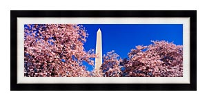 Visions of America Washington Monument And Cherry Trees In Bloom canvas with Modern Black frame