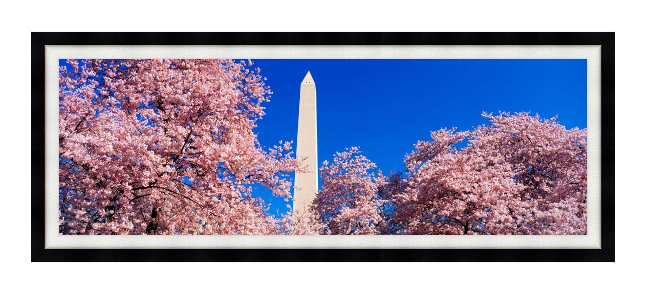 Visions of America Washington Monument and Cherry Trees in Bloom with Modern Black Frame