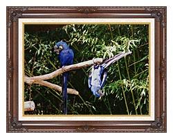 Brandie Newmon Blue Parrots Hanging Around canvas with dark regal wood frame