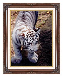 Brandie Newmon White Tiger Cub Exploring canvas with dark regal wood frame