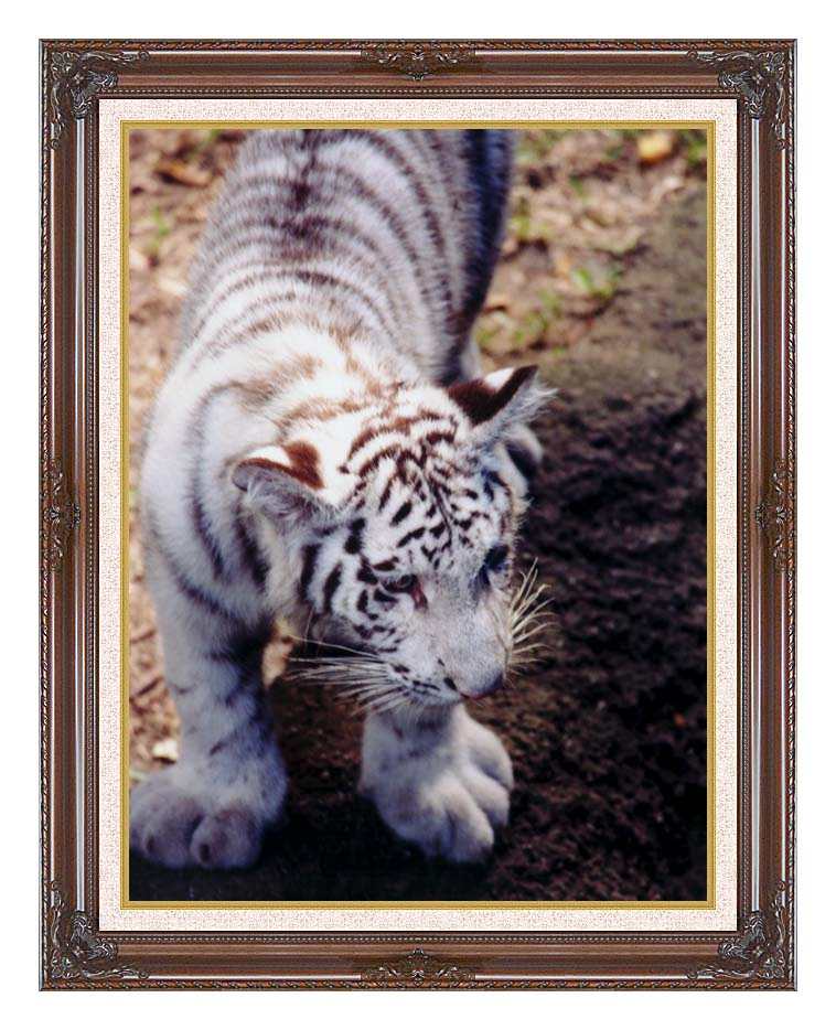 Brandie Newmon White Tiger Cub Exploring with Dark Regal Frame w/Liner
