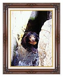 Brandie Newmon Sun Bear Cooling Off canvas with dark regal wood frame