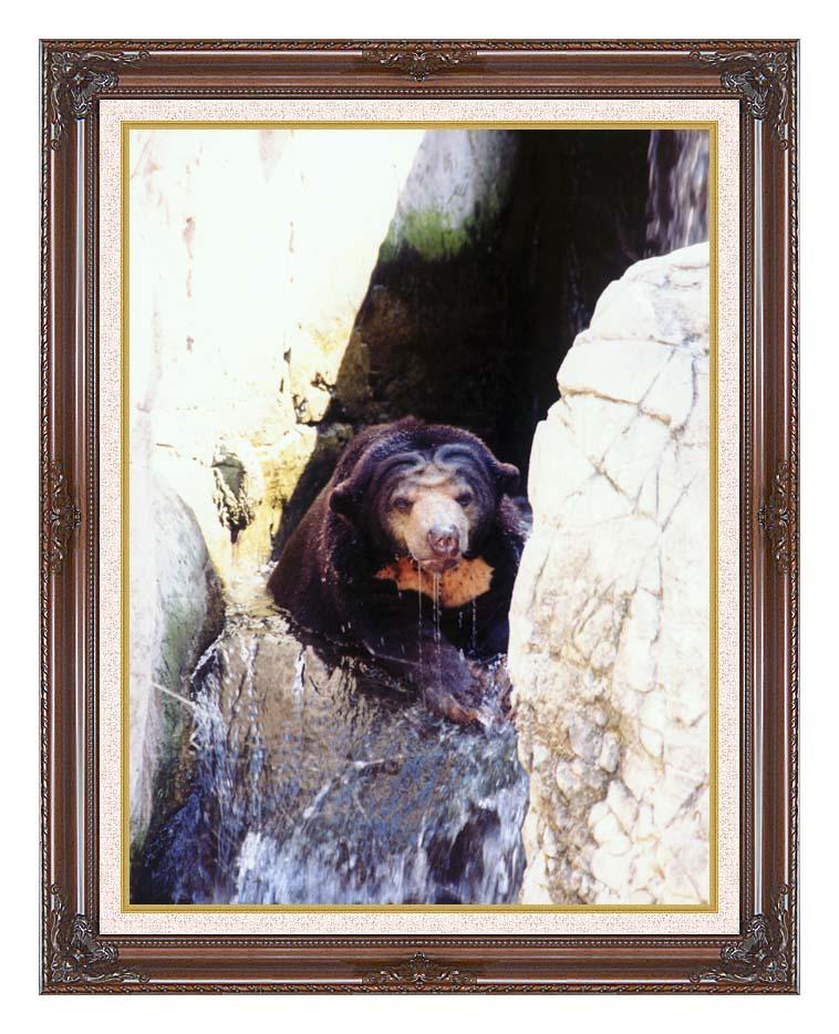 Brandie Newmon Sun Bear Cooling Off with Dark Regal Frame w/Liner