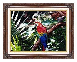 Brandie Newmon Macaw Profile canvas with dark regal wood frame