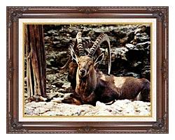 Brandie Newmon Ibex   Wild Goats canvas with dark regal wood frame