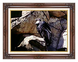 Brandie Newmon California Condor canvas with dark regal wood frame