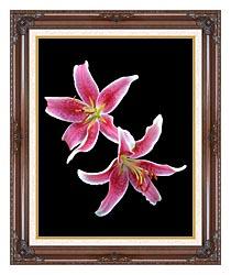 Brandie Newmon Stargazer Lily canvas with dark regal wood frame