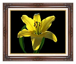 Brandie Newmon Asiatic Lily canvas with dark regal wood frame