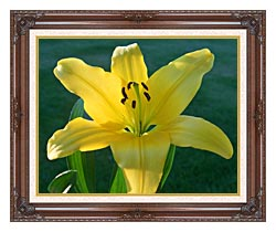 Brandie Newmon Yellow Lily canvas with dark regal wood frame