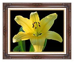 Brandie Newmon Yellow Lily Flower canvas with dark regal wood frame