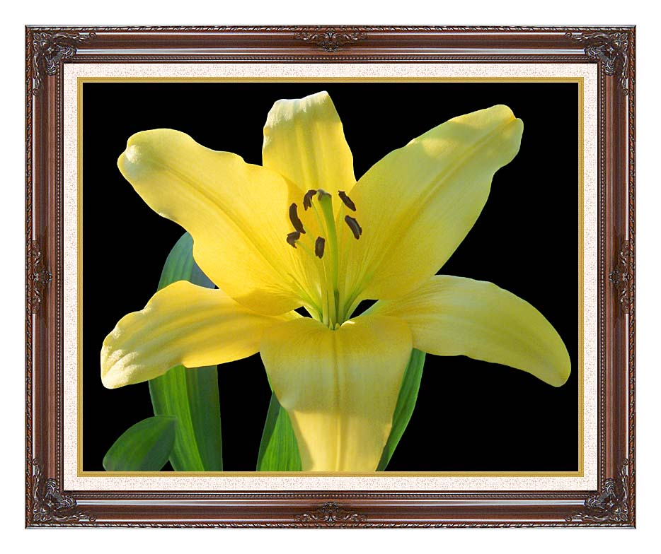 Brandie Newmon Yellow Lily Flower with Dark Regal Frame w/Liner