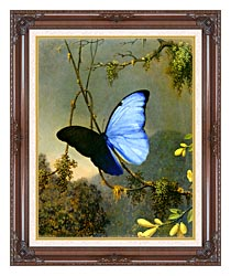 Martin Johnson Heade Blue Morpho Butterfly canvas with dark regal wood frame