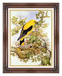 John Gould Golden Oriole canvas with dark regal wood frame