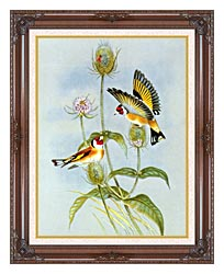 John Gould Goldfinch canvas with dark regal wood frame