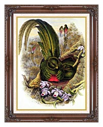John Gould Quetzal canvas with dark regal wood frame