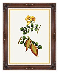 William Curtis Bladder Senna canvas with dark regal wood frame