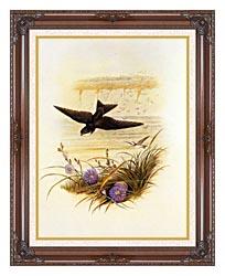 John Gould Sand Martin canvas with dark regal wood frame