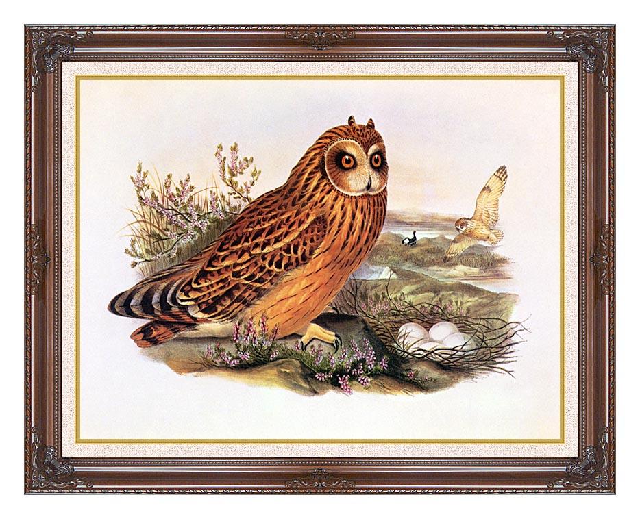 John Gould Short-Eared Owl with Dark Regal Frame w/Liner