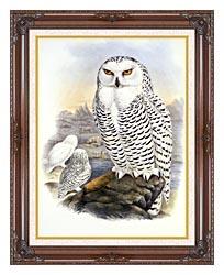 John Gould Snowy Owl canvas with dark regal wood frame