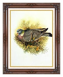 John Gould Wood Pigeon canvas with dark regal wood frame