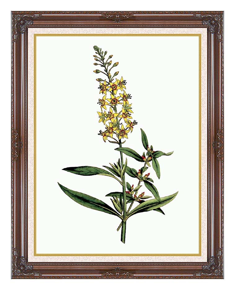 William Curtis Bulb Bearing Loosestrife with Dark Regal Frame w/Liner