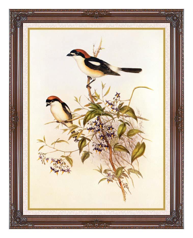 John Gould Woodchat Shrike with Dark Regal Frame w/Liner