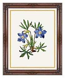 William Curtis Cut Leaved Violet canvas with dark regal wood frame