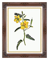 William Curtis Dwarf Cassia canvas with dark regal wood frame