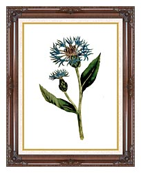 William Curtis Greater Blue Bottle canvas with dark regal wood frame
