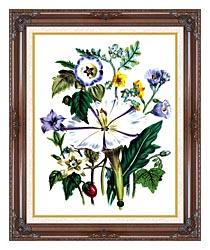 Jane Loudon Flower Art Print canvas with dark regal wood frame
