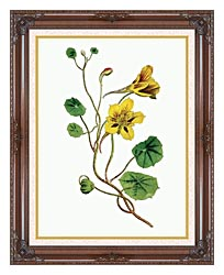 William Curtis Indian Cress canvas with dark regal wood frame
