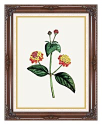 William Curtis Prickly Lantana canvas with dark regal wood frame