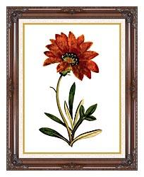 William Curtis Rigid Leaved Gorteria canvas with dark regal wood frame