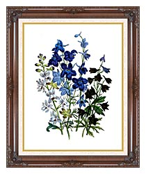 Jane Loudon Larkspurs canvas with dark regal wood frame