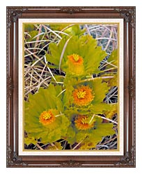 U S Fish And Wildlife Service Barrel Cactus canvas with dark regal wood frame