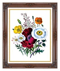 Jane Loudon Poppies Botanical canvas with dark regal wood frame