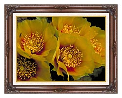 U S Fish And Wildlife Service Eastern Prickly Pear Cactus Flowers canvas with dark regal wood frame