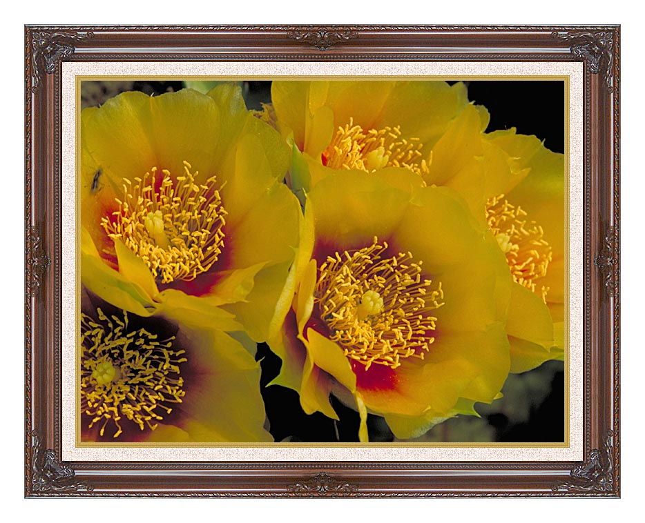 U S Fish and Wildlife Service Eastern Prickly Pear Cactus Flowers with Dark Regal Frame w/Liner