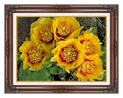 U S Fish And Wildlife Service Eastern Prickly Pear Cactus canvas with dark regal wood frame