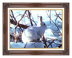 U S Fish And Wildlife Service Artic Hare Rabbit canvas with dark regal wood frame