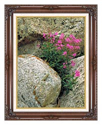 U S Fish And Wildlife Service Fireweed canvas with dark regal wood frame