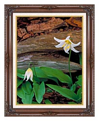 U S Fish And Wildlife Service Glacier Lily canvas with dark regal wood frame