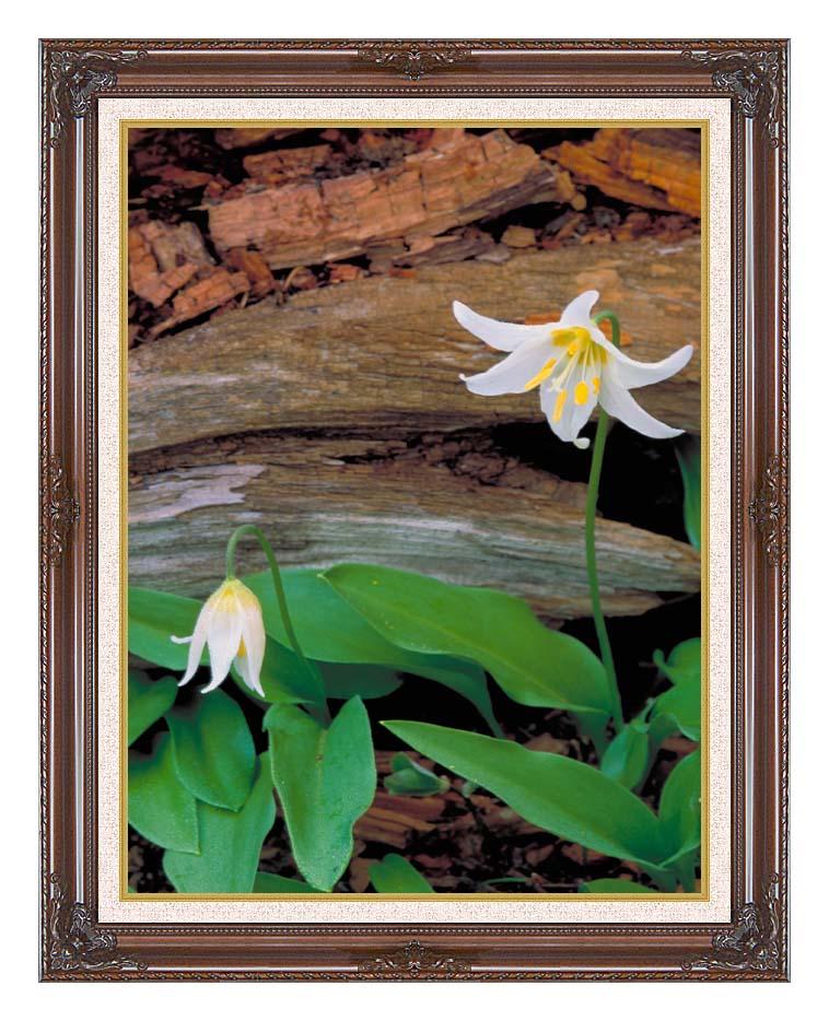 U S Fish and Wildlife Service Glacier Lily with Dark Regal Frame w/Liner