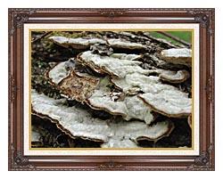 U S Fish And Wildlife Service Gray Shelf Mushrooms canvas with dark regal wood frame