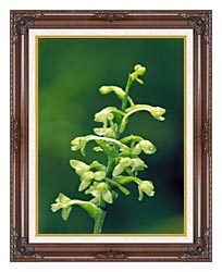 U S Fish And Wildlife Service Green Fringed Orchid canvas with dark regal wood frame
