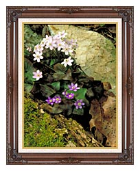 U S Fish And Wildlife Service Hepatica canvas with dark regal wood frame