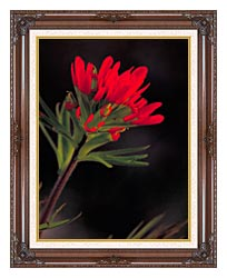 U S Fish And Wildlife Service Red Indian Paintbrush canvas with dark regal wood frame