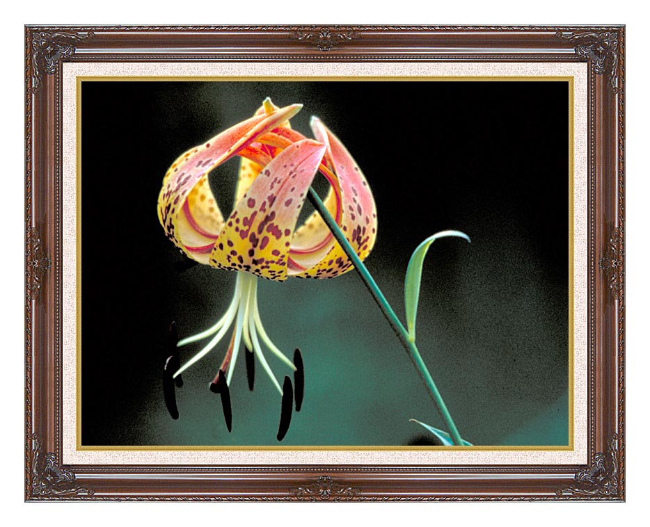 U S Fish and Wildlife Service Nodding Spotted Red Trillium with Dark Regal Frame w/Liner