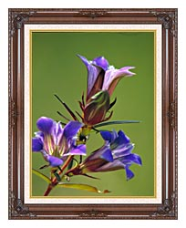 U S Fish And Wildlife Service Prairie Gentian canvas with dark regal wood frame